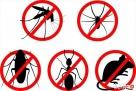 Insekt24 Dezynfekcja Dezynsekcja Deratyzacja Pruszków