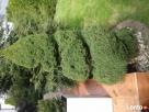 Usługi ogrodnicze, pielęgnacja zieleni, trawniki Siedlce - 2