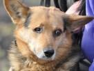 SNAJPEREK-spokojny,nieduży,grzeczny starszy psiak z 1oczkiem - 7
