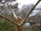 Wycinka i pielęgnacja drzew- sprzątanie ogrodów w Lublinie - 2