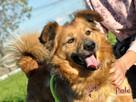 KELWINEK-nieduży, spokojny kudłaty psiak-5-6 lat-szukamyDOMU - 5