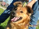 KELWINEK-nieduży, spokojny kudłaty psiak-5-6 lat-szukamyDOMU - 6