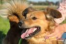 KELWINEK-nieduży, spokojny kudłaty psiak-5-6 lat-szukamyDOMU - 4