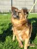 KELWINEK-nieduży, spokojny kudłaty psiak-5-6 lat-szukamyDOMU - 8