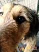 SALMONEK-spokojny, przyjazny,grzeczny młody psiak-szukamyDOMU - 6