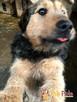 SALMONEK-spokojny, przyjazny,grzeczny młody psiak-szukamyDOMU - 8