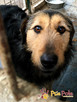 SALMONEK-spokojny, przyjazny,grzeczny młody psiak-szukamyDOMU - 1
