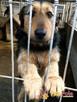 SALMONEK-spokojny, przyjazny,grzeczny młody psiak-szukamyDOMU - 3