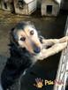 SALMONEK-spokojny, przyjazny,grzeczny młody psiak-szukamyDOMU - 4