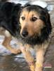 SALMONEK-spokojny, przyjazny,grzeczny młody psiak-szukamyDOMU - 5
