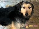 SALMONEK-spokojny, przyjazny,grzeczny młody psiak-szukamyDOMU - 7