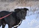 Sufler-czarny dostojny, piękny, mądry pies, 25kg - 8