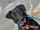 TEZORO-przepiękny, zadbany, bardzo przyjazny młody psiak-ADOP - 4