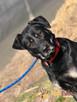 TEZORO-przepiękny, zadbany, bardzo przyjazny młody psiak-ADOP - 7