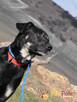 TEZORO-przepiękny, zadbany, bardzo przyjazny młody psiak-ADOP - 3