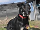 TEZORO-przepiękny, zadbany, bardzo przyjazny młody psiak-ADOP - 2