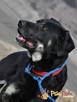 TEZORO-przepiękny, zadbany, bardzo przyjazny młody psiak-ADOP - 5