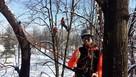 Wycinka i pielęgnacja drzew metodą alpinistyczną