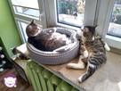 Dom tymczasowy dla kotów - poszukiwany - 4