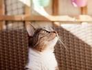 Chałka - delikatna kocia królewna - 4