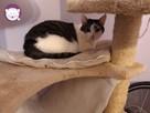 Vastra - nieśmiała koteczka szuka domu i przyjaciela! - 11