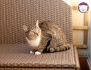 Chałka - delikatna kocia królewna - 2