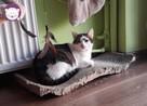 Vastra - nieśmiała koteczka szuka domu i przyjaciela! - 10