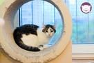 Vastra - nieśmiała koteczka szuka domu i przyjaciela! - 3
