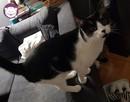 Tamu - duży kot do przytulania - 11