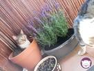 Chałka - delikatna kocia królewna - 6