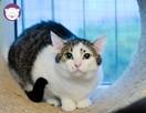 Vastra - nieśmiała koteczka szuka domu i przyjaciela! - 1