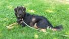 Zaginął Pies mieszaniec czarny podpalany