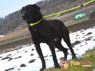 FROSTEREK-super wesoły, radosny, energiczny psiak szuka domu - 11