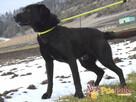 FROSTEREK-super wesoły, radosny, energiczny psiak szuka domu - 10