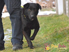 FROSTEREK-super wesoły, radosny, energiczny psiak szuka domu - 16