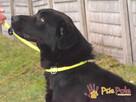 FROSTEREK-super wesoły, radosny, energiczny psiak szuka domu - 12