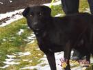 FROSTEREK-super wesoły, radosny, energiczny psiak szuka domu - 4