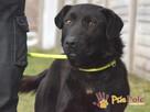 FROSTEREK-super wesoły, radosny, energiczny psiak szuka domu - 8