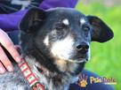 HAZARDZIK-starszy, niewielki psiak po przejściach szuka dom - 12