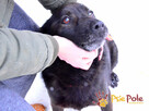 KUFELEK-wesoły, super kochany psiak szuka troskliwego domu, - 10