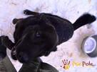 KUFELEK-wesoły, super kochany psiak szuka troskliwego domu, - 6
