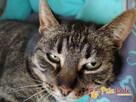 KATSI-śliczna pręgowana koteczka szuka kochającego domu, Adop - 6