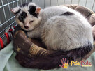 OGONEK-Biały podrapany kotek szuka dobrego domu, adopcja