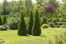 Iglaki drzewa i krzewy ozdobne.Tuja, thuja, świerk, jodła, s