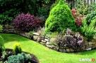 Regeneracja trawnika.Usługi ogrodnicze.Trawniki.Nawodnienia