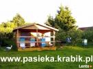 Miód polski z pasieki Maszewo - Krabik Maszewo