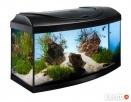 najwi.wybór ryb akwariowych i do oczka wodnego tanie akwaria - 8