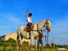 Nauka jazdy konnej przejażdżki bryczkami Wolsztyn Wolsztyn