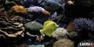 MORSKIE AKWARIUM DVDw Twoim TV marine aquarium fish LCD CRT Suwałki