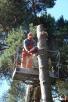 Wytnę Drzewo za DARMO !!! - 3